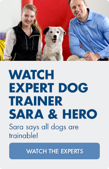 Watch the experts! Expert dog trainer Sara and her dog Hero show off impressive tricks, showing that all dogs are trainable.