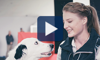 Watch dog trainer Sara Carson and Hero share their passion for building bonds while having fun doing it in this video.